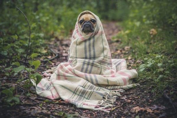 DoggieBlanket